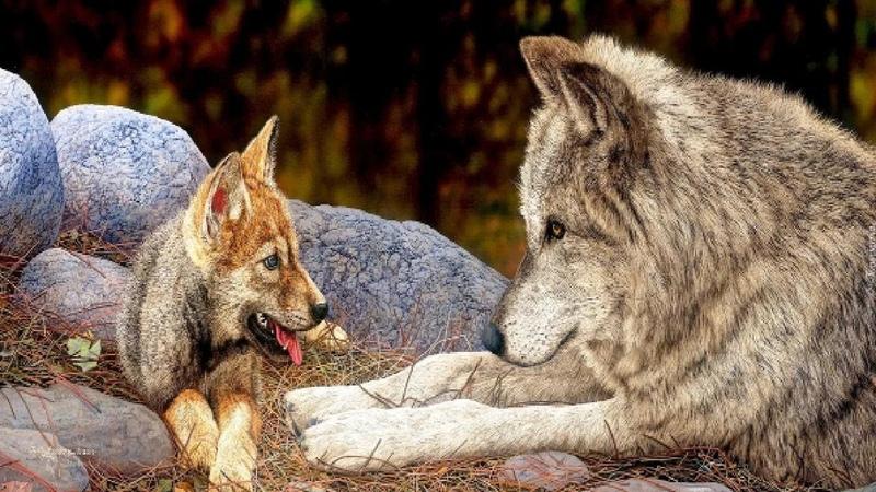 Волчицы не стало но её ВОЛЧАТА оказались под надежной опекой благодаря невероятному случаю