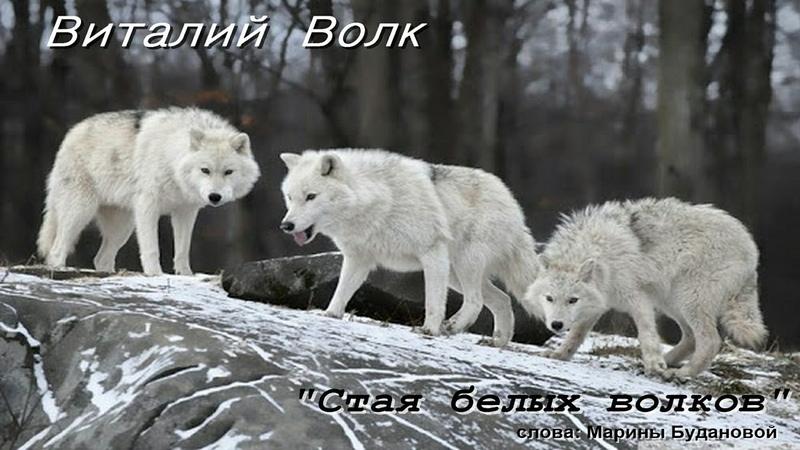 🐺New Стая белых волков Виталий Волк🐺