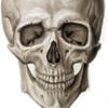 Анатомия человека Вики