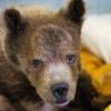 РКЦентр «ВЕЛЕС» — помощь диким животным