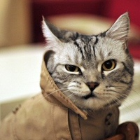 Фотография профиля Дмитрия Шкотова ВКонтакте