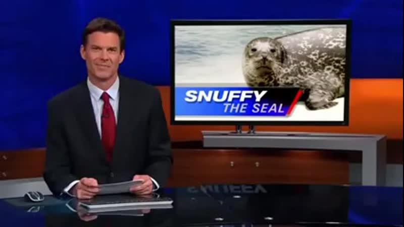 Жесть Акула съела тюленя на глазах у толпы_low.mp4