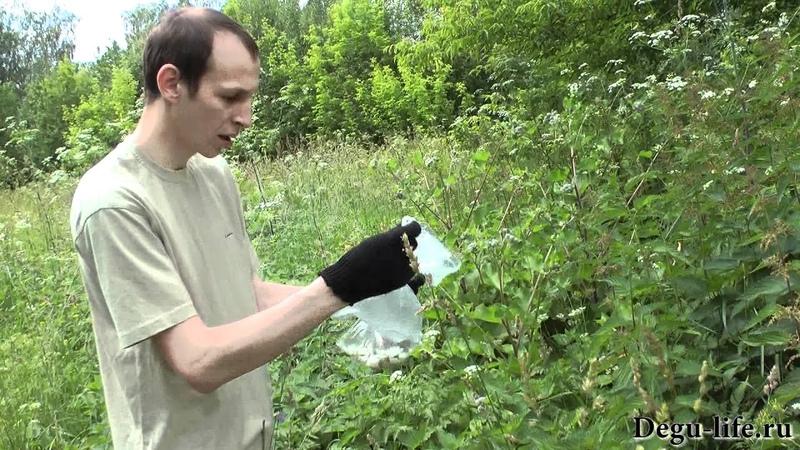 Собираем растения в поле для дегу