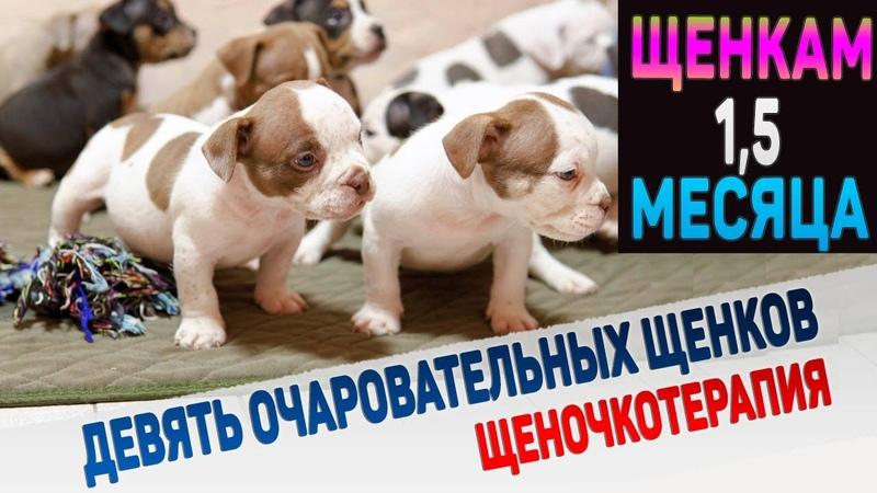 Полчаса релакса вместе с 9 очаровательными щенками