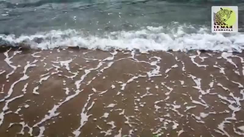 Олени и море Что ещё надо для полной идиллии