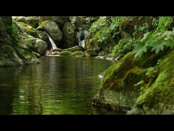 계곡의 편안히 흐르는 물소리와 새소리, 명상과 치유, 휴식과 공부 집중력, 수